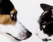 Cats vs. Dogs: Which Causes the Most Property Damage